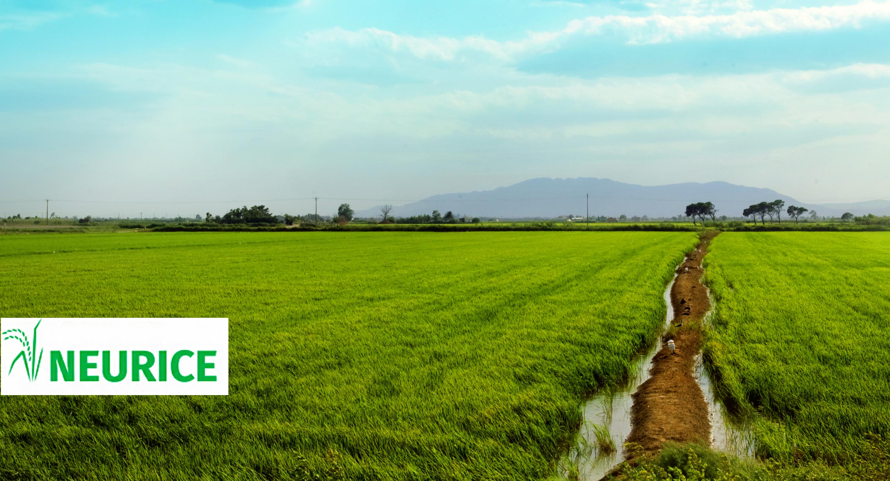 The Montsià Rice Chamber leads the agronomic part of the Neurice project